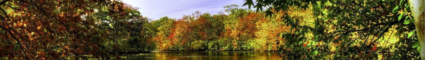 Efterårstræer ved sø