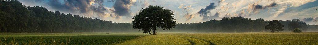 Enligt træ på mark