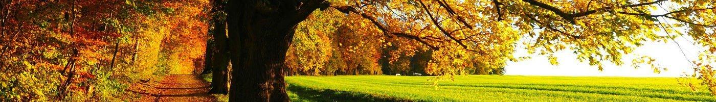 Sti mellem skov og mark