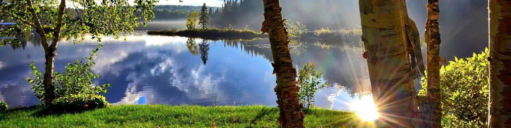 Træer ved sø